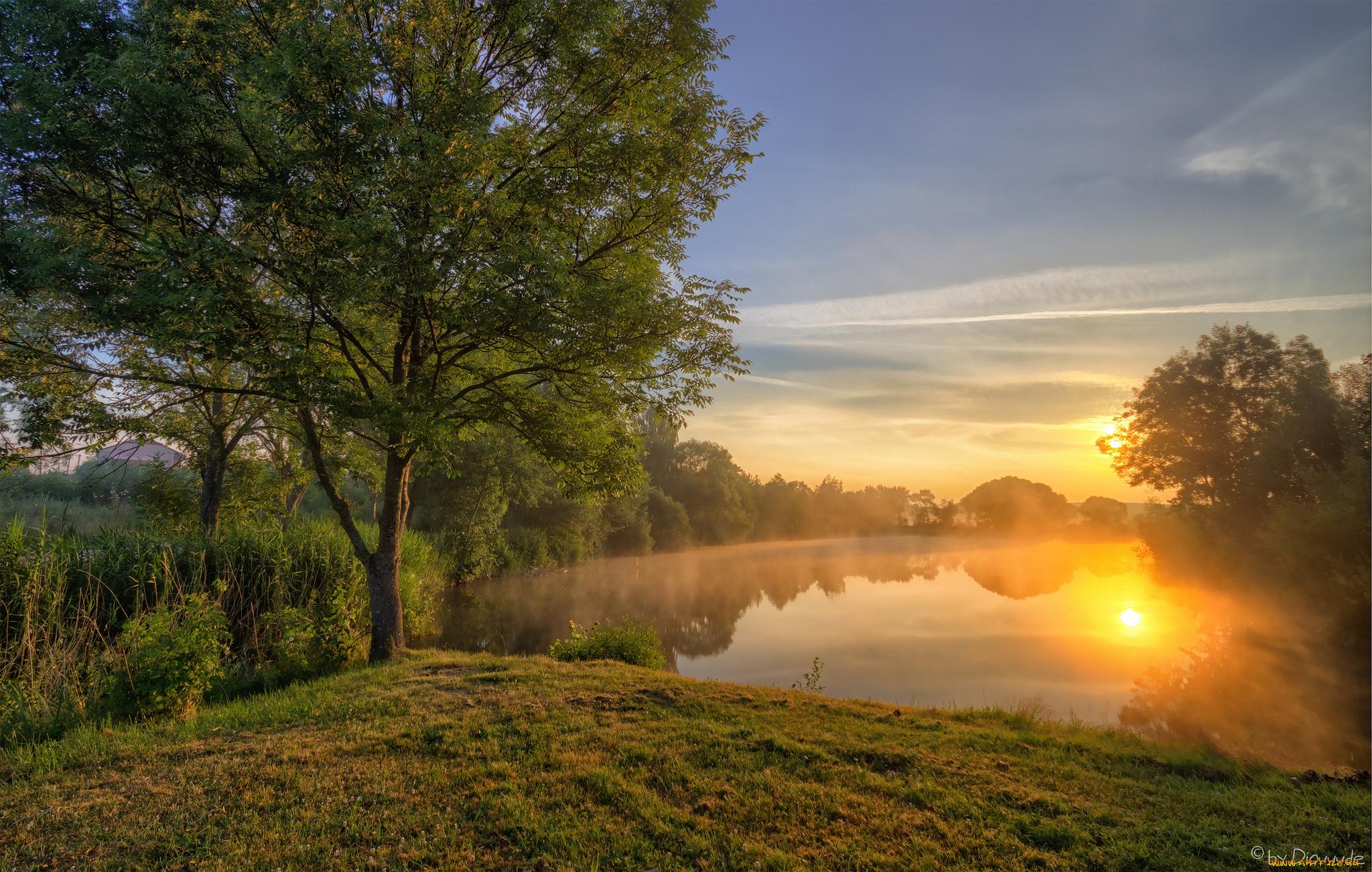 солнца красивые фотографии утро природа растения собрали